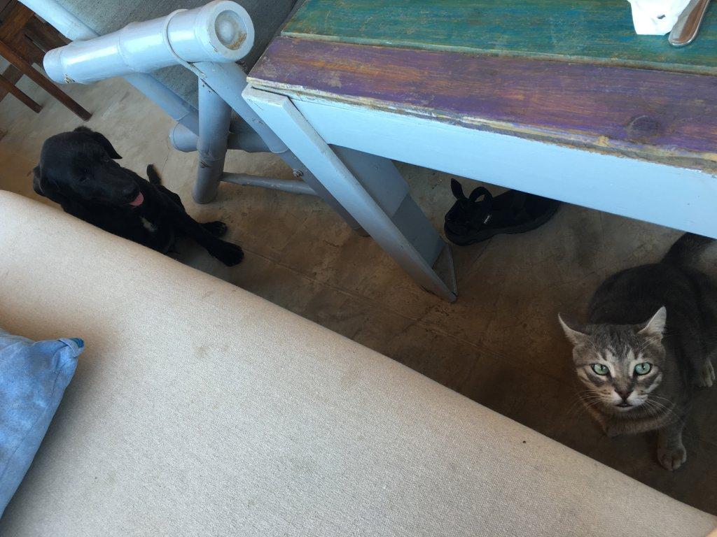 ダハブの犬と猫