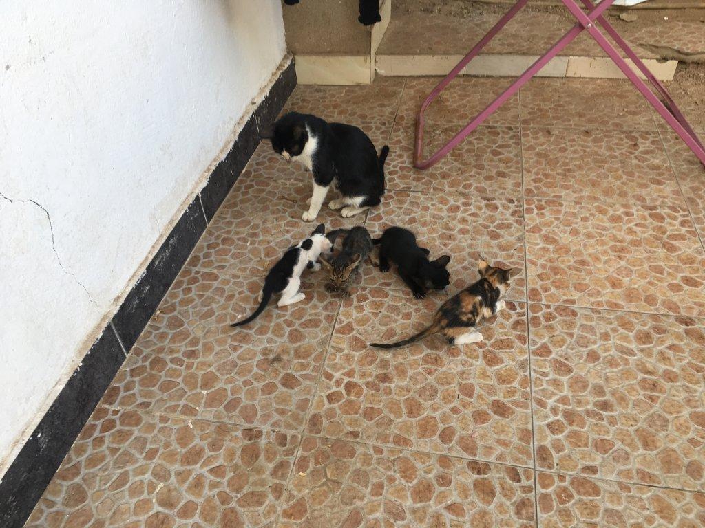 四匹の子猫と母猫