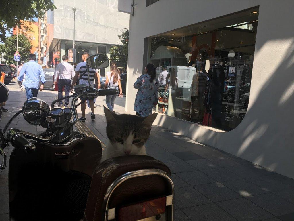 猫とバイク