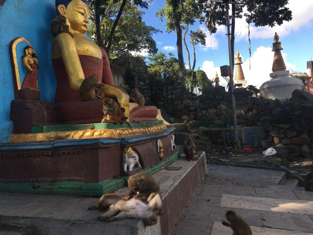 スリャビナヤック寺院の猿
