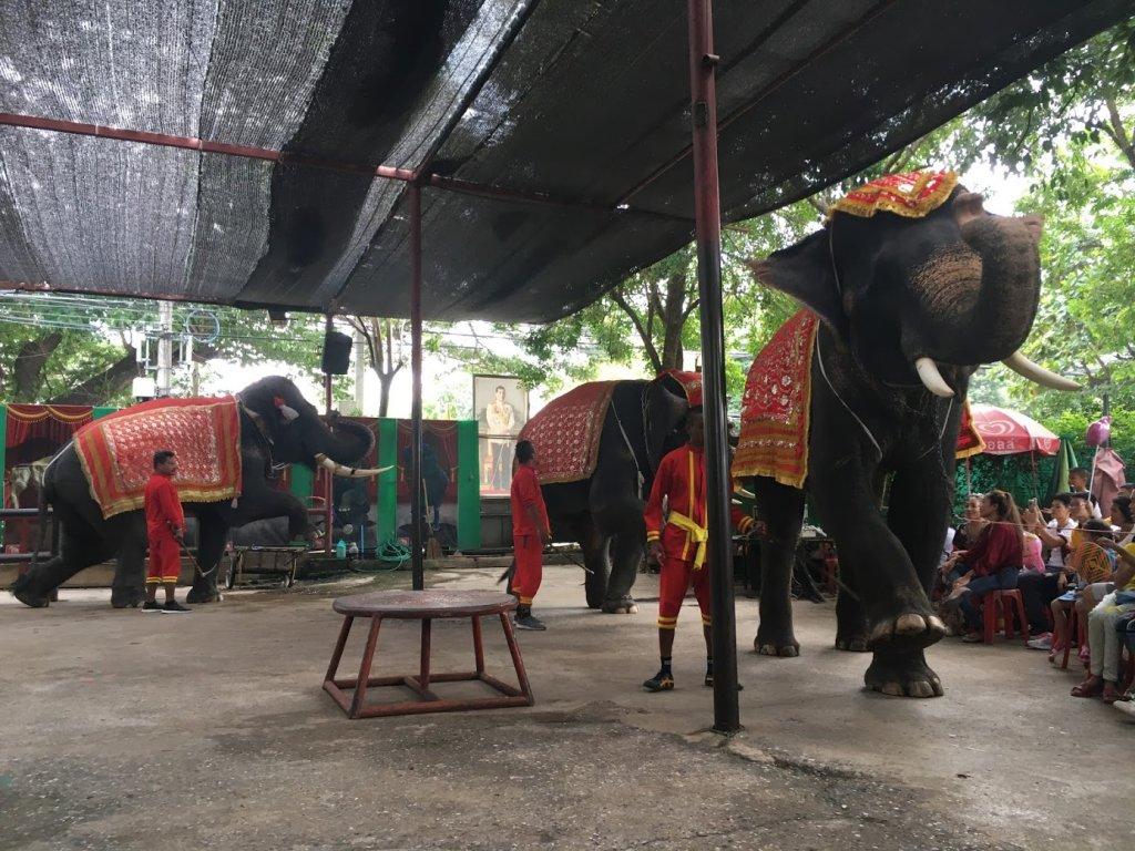 象のダンス