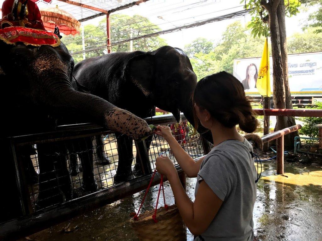 象に餌をあげる