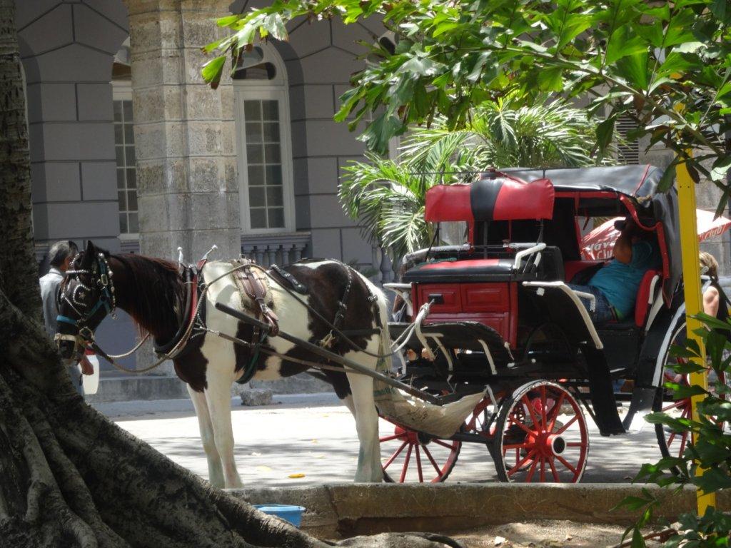 ハバナの馬車