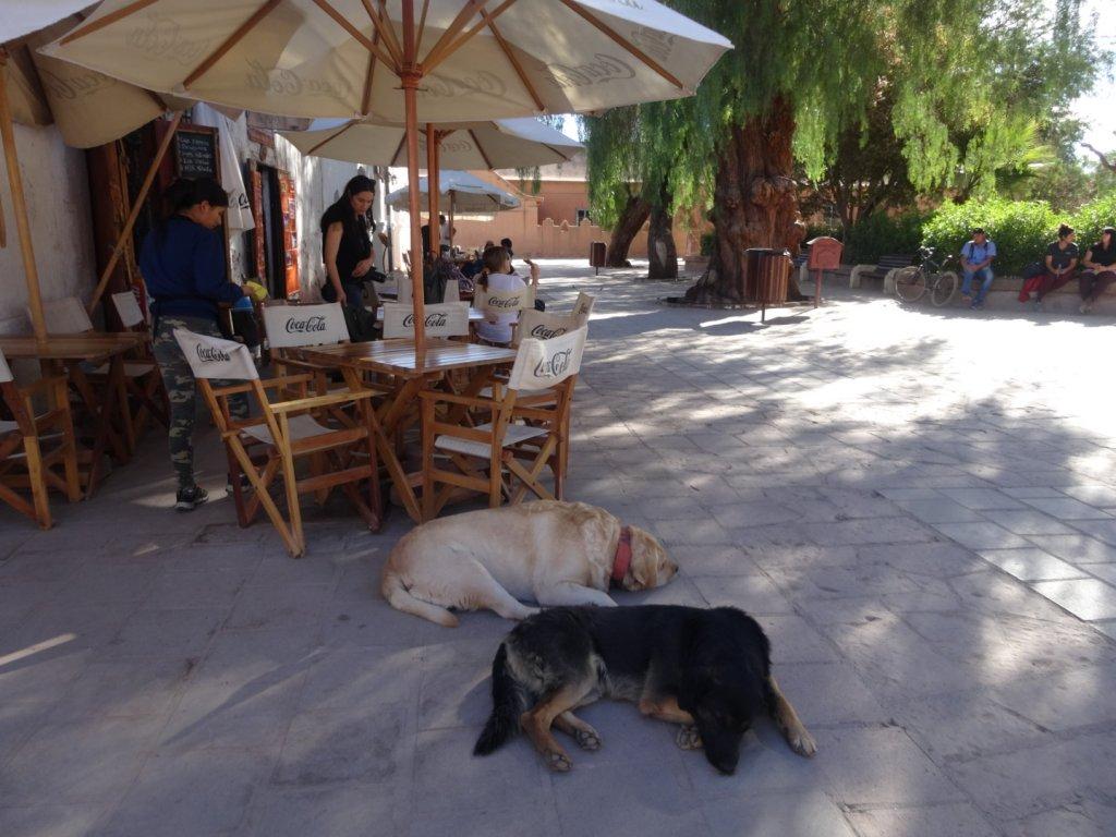 アタカマのカフェ